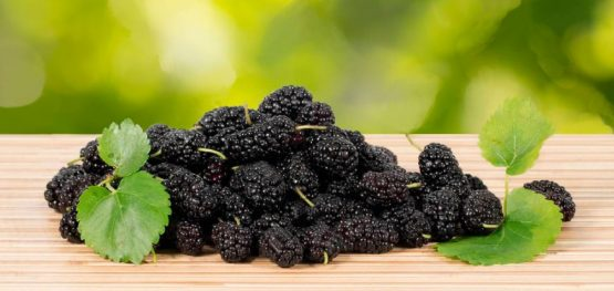 Dried black mulberries